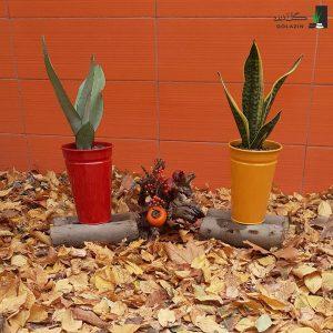 خرید گیاه سانسوریا مجموعه سانسوریا با گلدان فلزی
