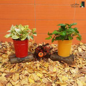 خرید گیاه پتوس مجموعه پتوس سبز و مرمر
