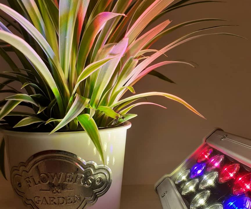 روش ساخت لامپ رشد گیاه