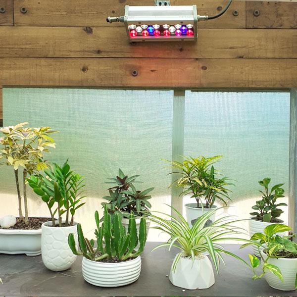 نور مصنوعی گیاهان آپارتمانی
