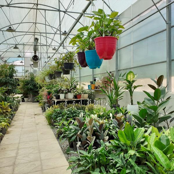 گیاهان آپارتمانی ارزان