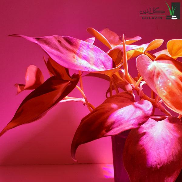 خرید لامپ رشد گیاه