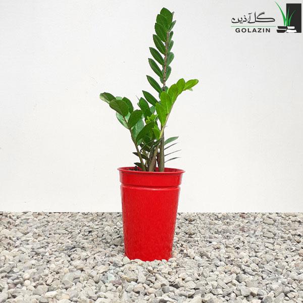 زاموفیلیا سبز با گلدان فلزی